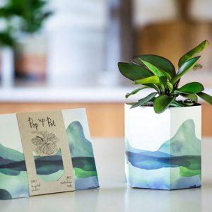 Pop up Plant Pot Mountain